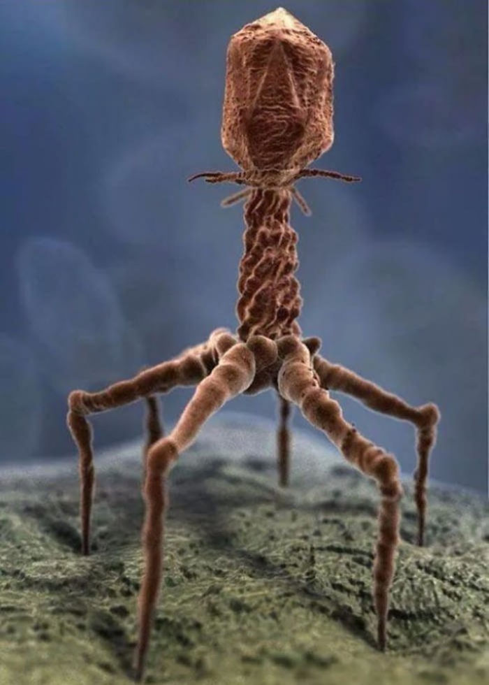 Processed Image Of An Actual Virus Via Electron Microscope