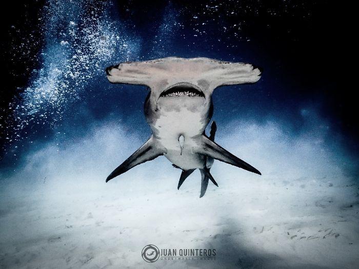 sharks in the sandstorm