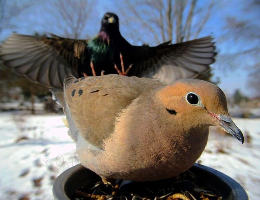 bird attacking another bird