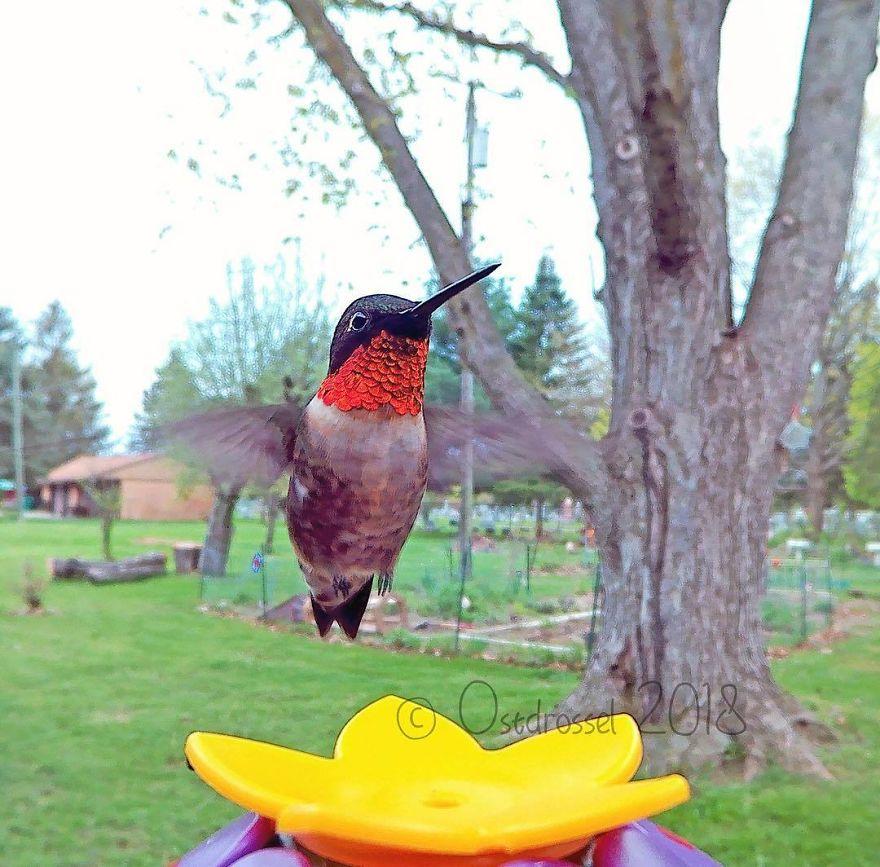 bird on yellow flower