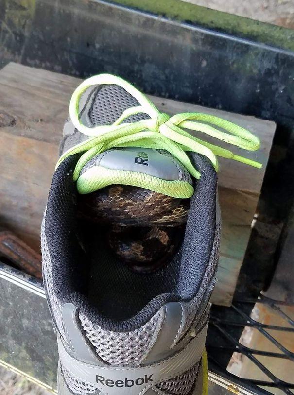 snake in shoe
