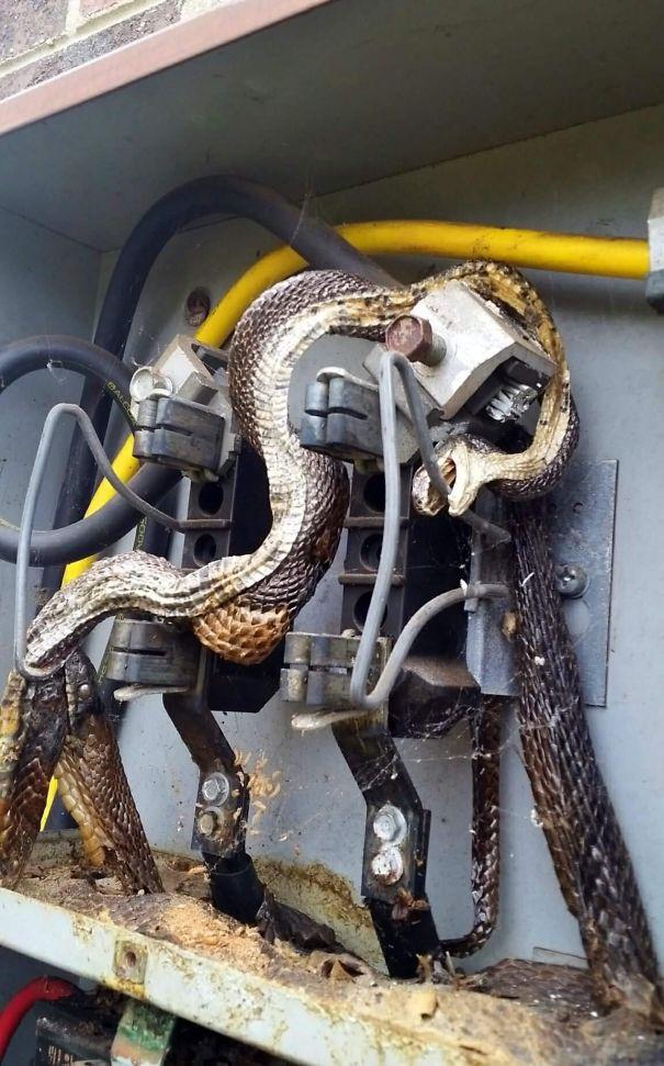 snake in power supply
