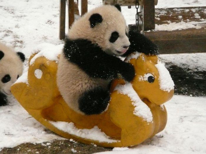 Baby Riding