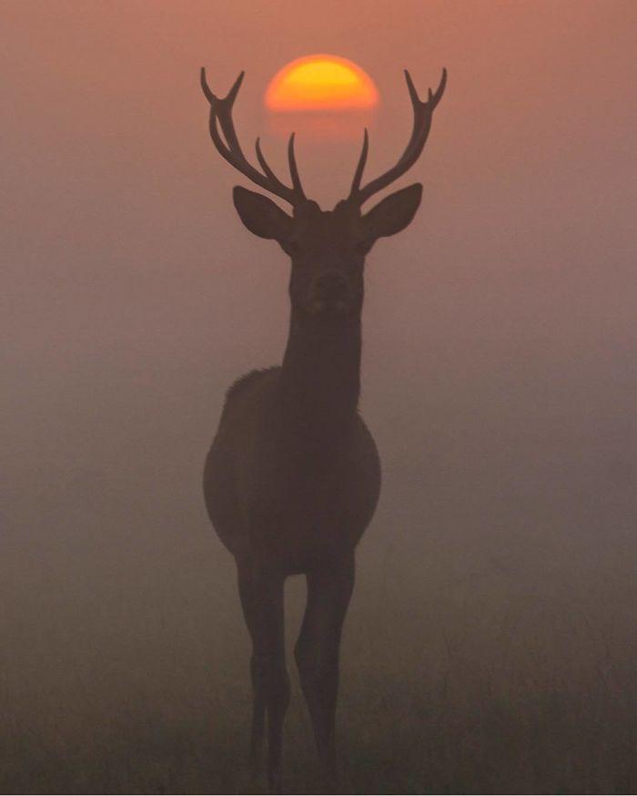 deer and sun