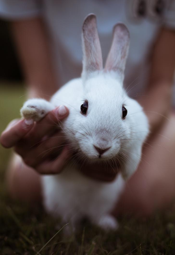 white bunny rabbit saying hi