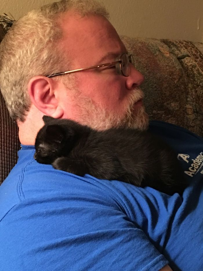 black kitten with dad