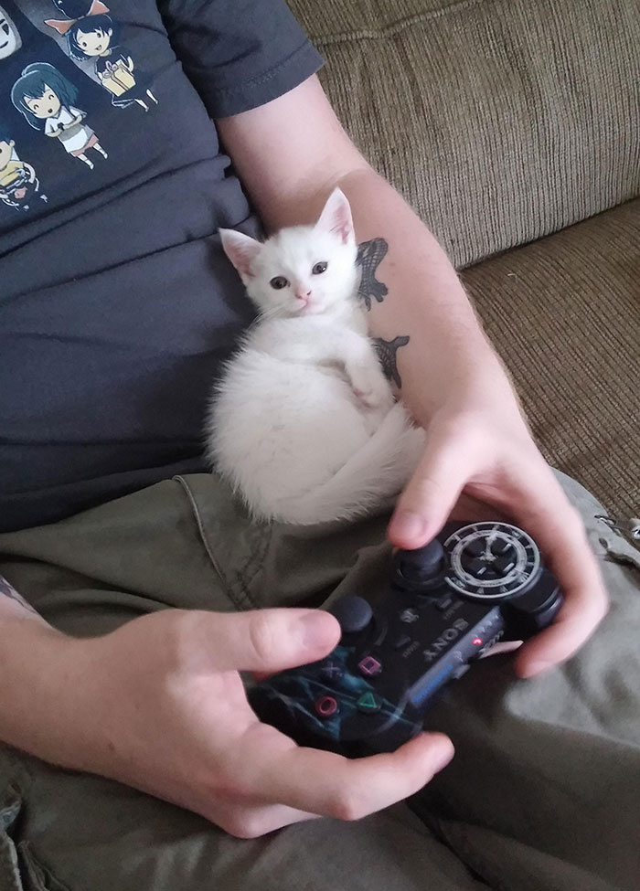 white kitty playing games
