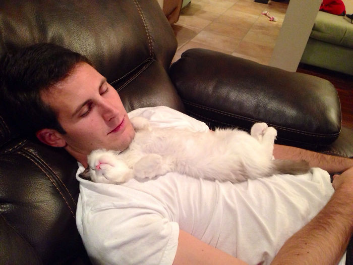 white cat on mans chest