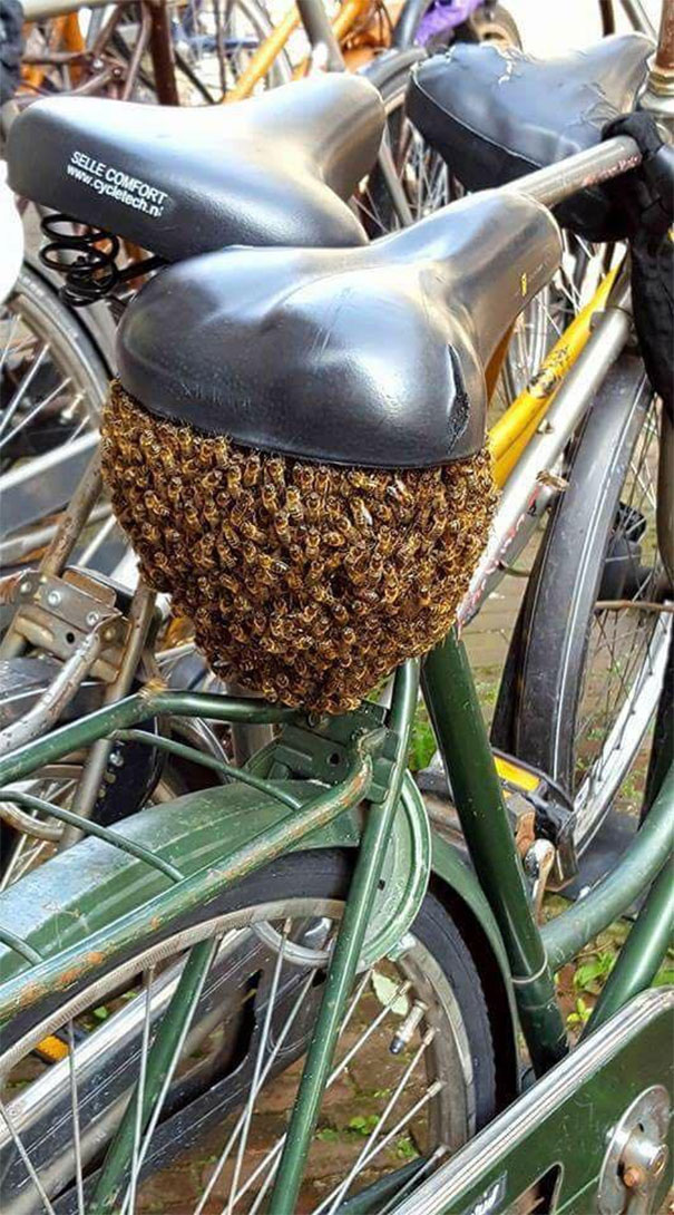 bees under the bicycle seat