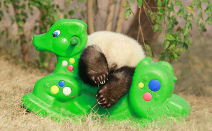 Panda and  toy horse