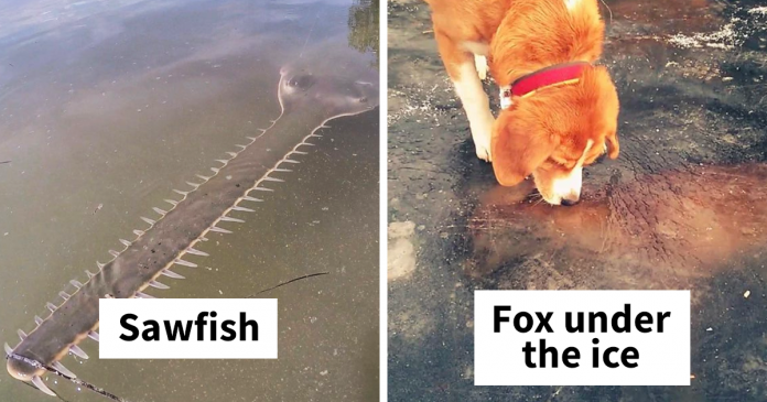 """30 Times Nature Made Us Say """"NOPE"""" (WARNING: This List Is Not For Sensitive People)"""