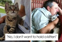 50 People Who Said They Didn't Want The Damn Cats