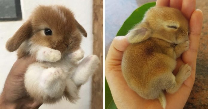 30+ Adorable Bunnies to Put You in the Easter Spirit