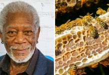 Morgan Freeman Turns His 124-Acre Ranch Into a Bee Sanctuary to Save the Planet