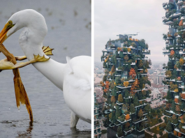 Top 30 Most Stunning Photos From The National Geographic Instagram Photography Contest