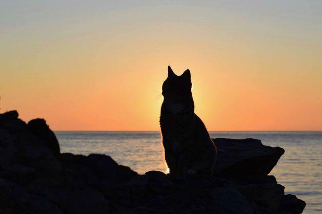 cat on a rock near the sea