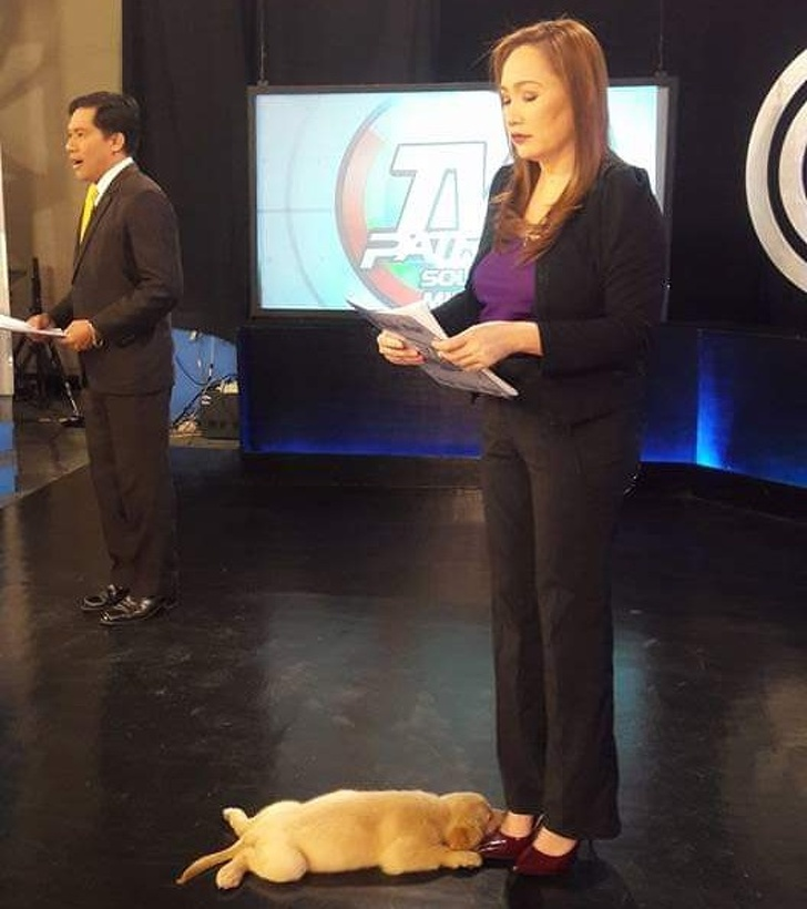 puppy and news lady