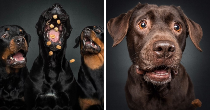 Hilarious Expressions Of Dogs Trying To Catch Treats In Mid-Air (New Pics)