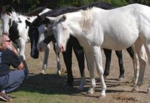 Willie Nelson Rescued 70 Horses From a Slaughterhouse and Let Them Roam Free on His Ranch