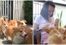 A Corgi Cafe Actually Exists, And It's The Cutest Way To Get Your Caffeine Fix