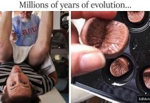 The 'Edible Anus' Company Makes Chocolate Buttholes And Can Even Make A Mold Of Yours Too