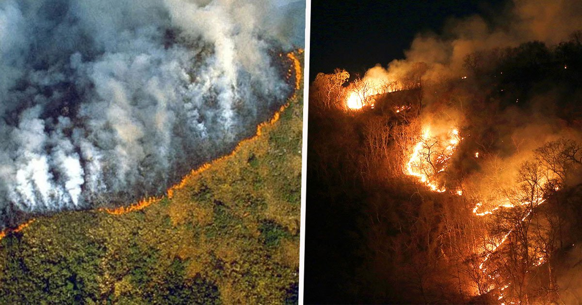 The Amazon Rainforest Has Been Devastated By Fire For Weeks And