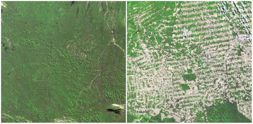 Forests in Rondonia, Brazil. June 1975- August.2009
