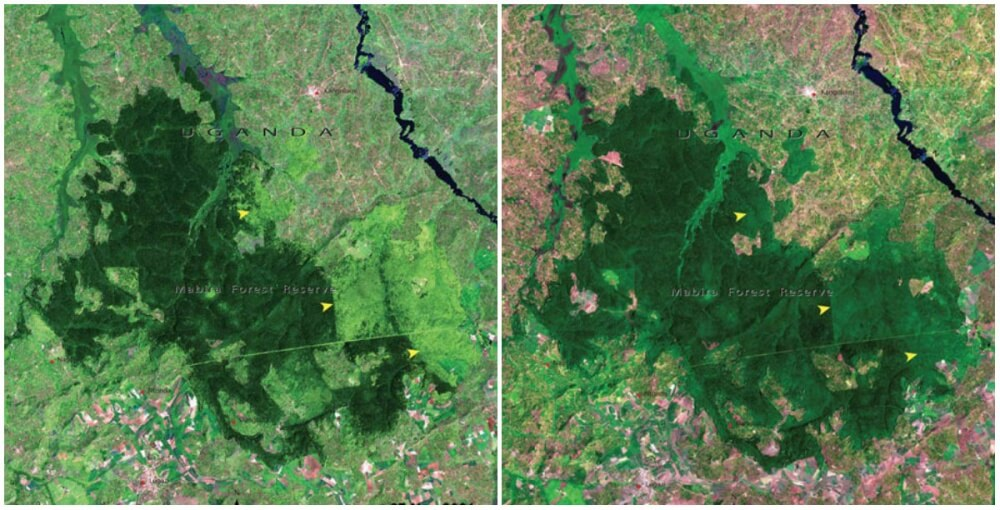 Mabira Forest, Uganda. November 2001- January 2006