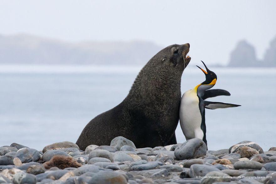 penguin seal