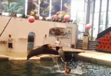 """Baby Dolphin Dies """"Mid-performance"""" At Water Park After Allegedly Being """"Overworked"""""""