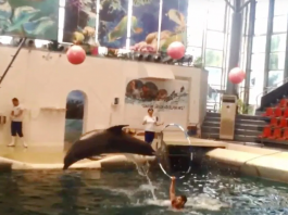 "Baby Dolphin Dies ""Mid-performance"" At Water Park After Allegedly Being ""Overworked"""