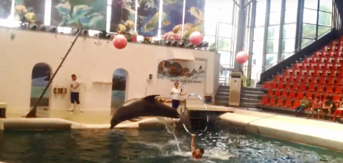 Baby Dolphin Dies
