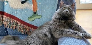 Meet Belarus, An Adorable Cross-Eyed Kitten That's Stealing Everyone's Hearts
