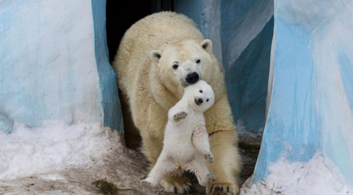 Of The Cutest Parenting Moments In The Animal Kingdom