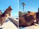 Rescue Dog's Heartwarming Reaction To Seeing The Ocean For The First Time