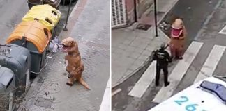 Man Leaves House Dressed As T-Rex During Lockdown In Spain