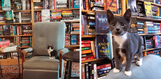 Kittens Roam Freely In This Bookstore In Canada