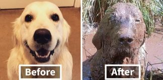 Reasons You Should Never Let Your Dog Play In The Mud