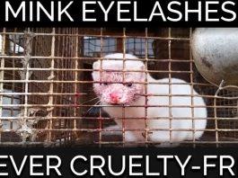 Act Now! Minks Are Violently Killed for Sephora's False Eyelashes