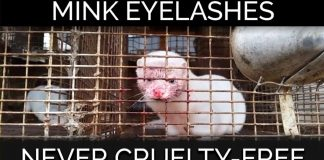 Act Now! Minks Are Violently Killed for Sephora's False Eyelashes