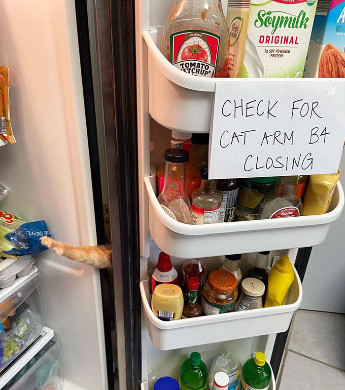 Learn About Carrot, The Viral Cat That Gives His Owners Anxiety