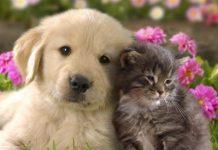 I Hate You, I Love You: Cat-Dog Version