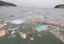 Discarded Covid-19 Face Masks And Gloves Poses Major Threat To Ocean Life