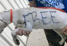 """Abandoned Dog With """"Free"""" Written On Her Fur With Permanent Marker Rescued"""