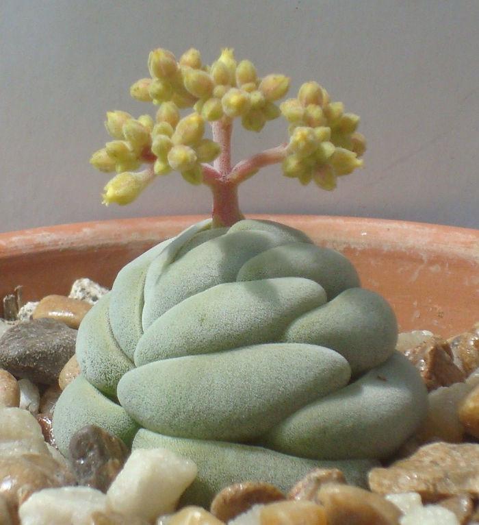 Unusual Succulent