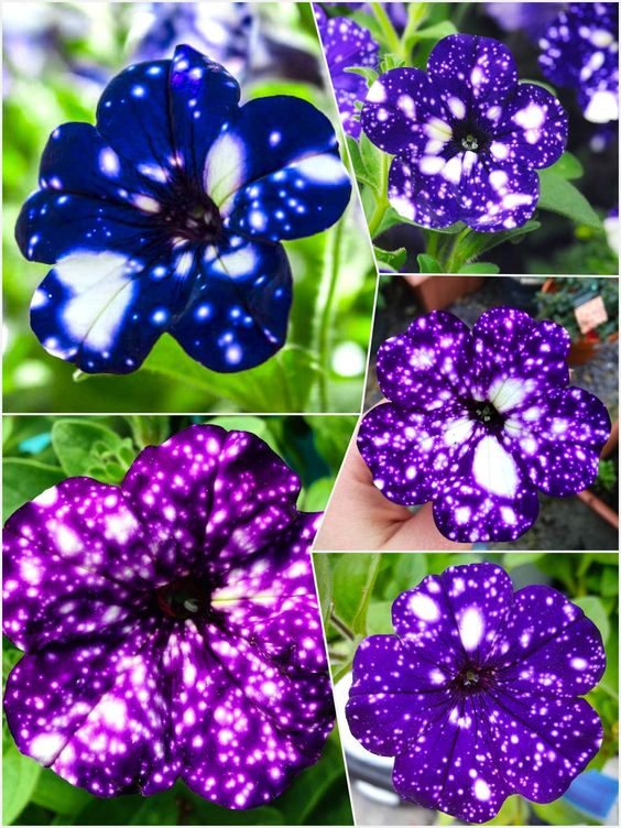 Beautiful Galaxy Flowers Are Perfect For Those Who Love Starry Nights