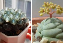 15 Types Of Succulents That Look Totally Out Of This World