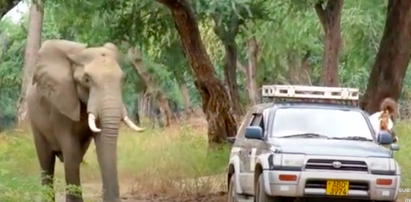 Elephant With A Bullet Lodged In His Head Asks Vets For Help