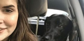 Woman Asked To Show Her Dog's Driving License To Prove Ownership Of His Facebook Account