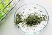 Why You Should Not Use Synthetic Cannabinoids